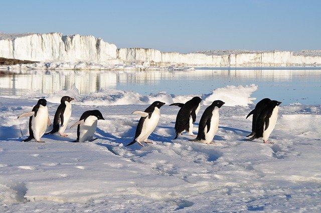 Google Penguin Update Header